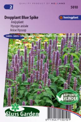 Dropplant Blue Spike (Agastache)