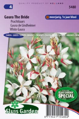 Prachtkaars The Bride (Gaura)
