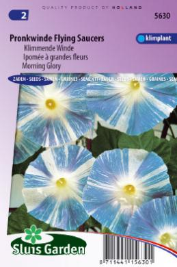 Klimmende Winde Flying Saucer (Ipomoea)
