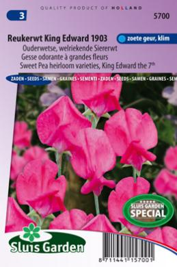 Reukerwt King Edward the 7th 1903 (Lathyrus)